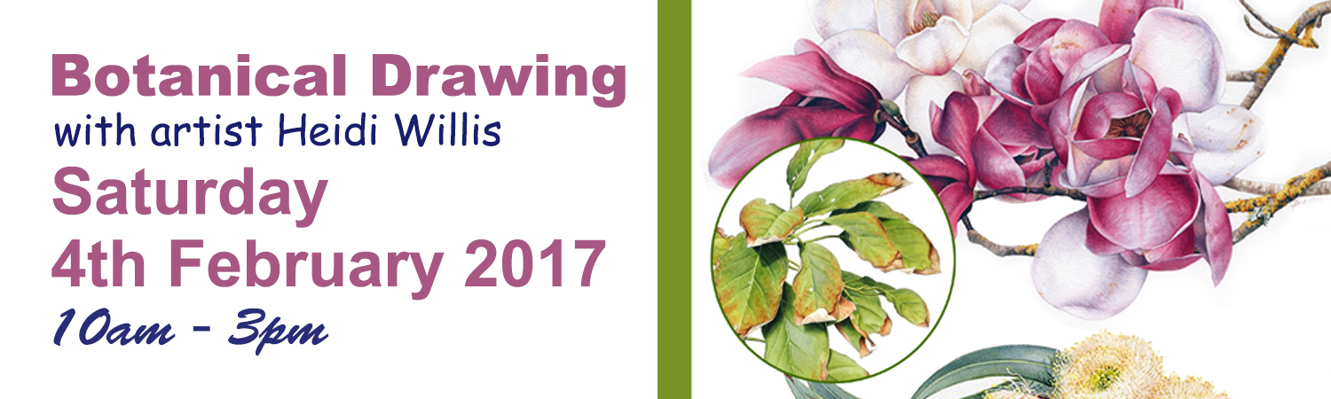 Botanical Drawing 4th March with artist Heidi Willis
