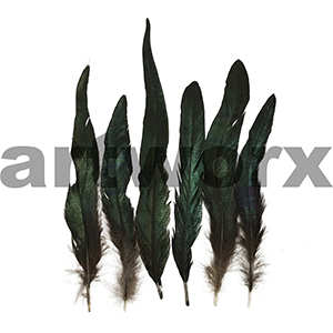 Arbee - Feathers - BK - 6pc