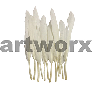 Arbee - Feathers - White 12pc
