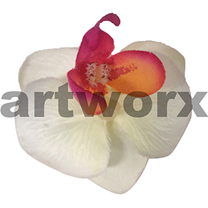 White Small Orchid Flower