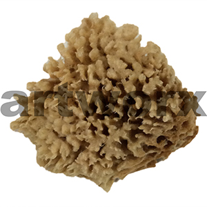 "Natural Sponge Sea Wool 5"" Art Sponges"