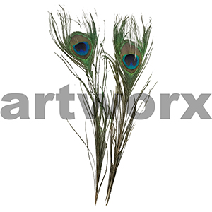 Value Craft - Feather Pack - 2pc - Feather Peacock