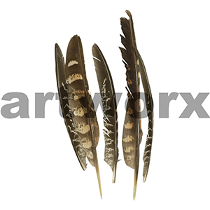 Value Craft - Feather Pack - 5pc - Pheasant Quill Natural