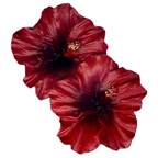 Double Hibiscus Red Resin Embellishment